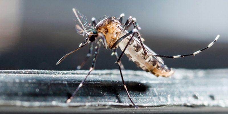 consejos mosquitos hogar