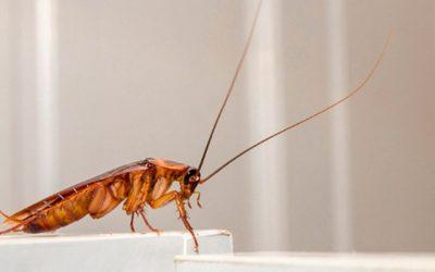 Cómo evitar una plaga de cucarachas este verano
