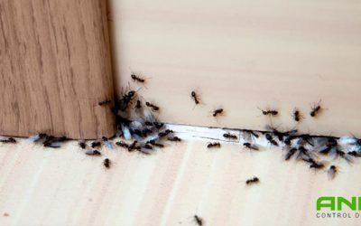 Consejos para evitar hormigas en tu hogar