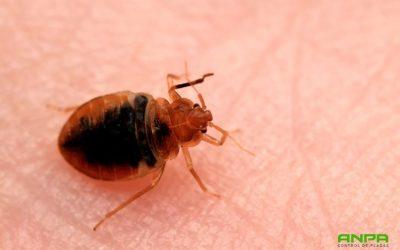 Consejos para prevenir y eliminar plagas de chinches en Murcia