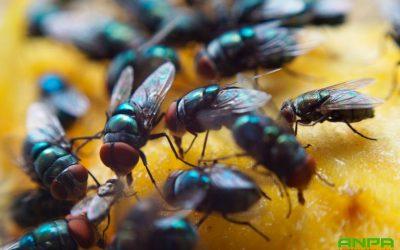 Consejos para evitar plagas de moscas